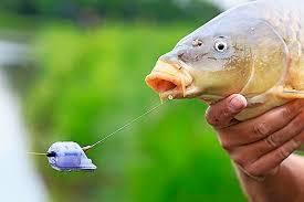 Method feeder korf